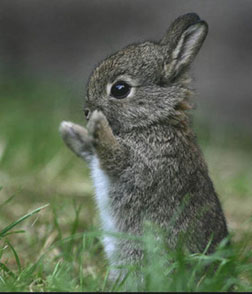 Puppies Bunnies on Hop On Over To Cute Overload For More Baby Bunny
